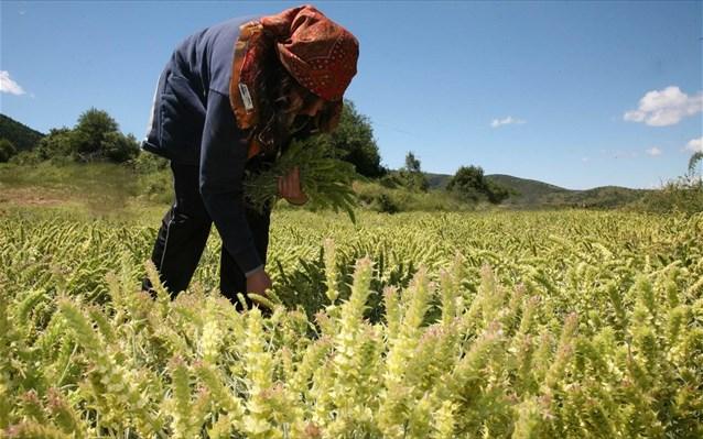 Επιπλέον 488 αγρότες στο πρόγραμμα «Νέοι Γεωργοί» στη Στ.Ελλάδα